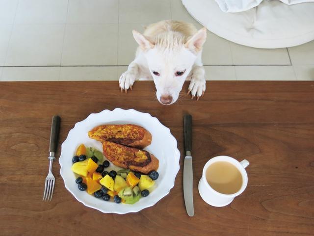画像: 桑原さんの自宅には、保護団体と庭から迎え入れた犬1ぴきとネコ2ひきがいます。 「人間のおやつは食べないけれど、〈きょうのメニューはなんですか?〉と たずねに来る姿がたまらなくいとおしい」と桑原さん。 その様子は本書のコラムでも紹介しています。