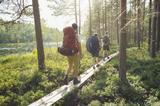 画像: 首都ヘルシンキから約1時間で行くことができるヌークシオ国立公園は、ヘルシンキ市民の憩いの場です。夏場は、ベリー摘みがおすすめ。フィンランドのベリーは白夜によって夏の長い日の光に照らされて、とても栄養価が高いのが特徴。また、ベリーの種類もブルーベリー、クランベリー、クラウドベリー、リンゴンベリー(コケモモ)と様々な種類があります。フィンランドには、自然享受権があり、森の中を自由に歩いて、ベリーやきのこといった森の幸を楽しむ権利が誰にもあります。ベリー摘みでは、そんな自然と共に生きるフィンランド人の生き方を垣間見ることができるでしょう。また、8月26日は、12月6日のフィンランド独立100周年までちょうど100日を記念したネイチャー・デイが開催されます(ネイチャー・デイ自体は2017年中4回開催されます。)。