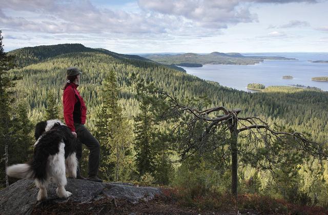 画像: ロシア国境にほど近いフィンランド東部カレリア地方にあるコリは、フィンランドの人にとってのいわば「心の故郷」と言える場所です。ウッコ・コリの丘の上からピエリネン湖を臨む光景は、まさに日本人にとっての「富士山」のような光景。ごつごつとした岩肌、針葉樹の木々、その合間に見える美しい湖とそこに浮かぶ島々。これらの光景は多くの芸術家にインスピレーションを与えてきました。フィンランドを代表する作曲家であるシベリウスの交響詩「フィンランディア」もまた、ここカレリア地方を題材としています。フィンランドの国民的叙事詩であるカレワラもこのカレリア地方の伝承をルーツとしています。フィンランド語で書かれたカレワラは、フィンランド人のアイデンティティーの形成にも大きな影響を与えたと言われています。フィンランド独立100周年を迎える今年、フィンランドらしさを求めて旅に出てみてはいかがでしょうか。フィンランドのソウルフードとも言えるカレリア・パイにもぜひトライしてみてください。
