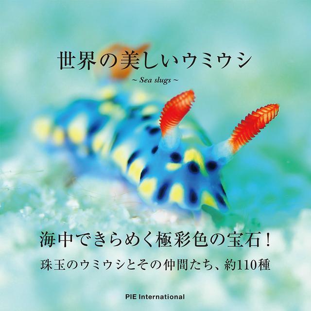 画像: 珠玉のウミウシとその仲間たち