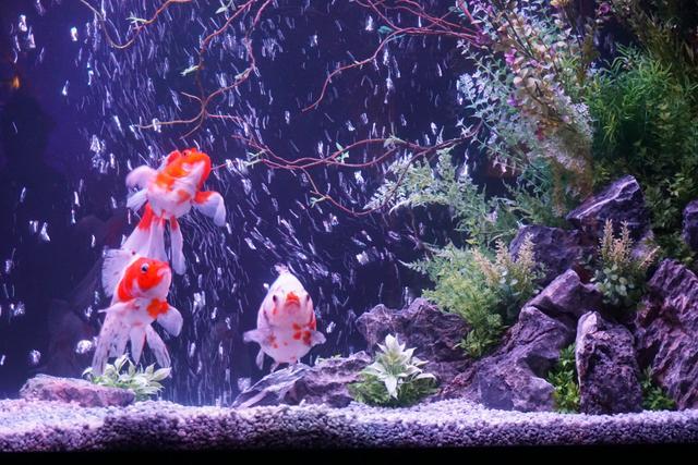 画像: 夏の風物詩である金魚を主役にした特設水槽がエレベーターホールに展示されています。
