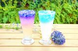 画像: 「バタフライピー(ライチ、ピーチ、ライム、杏仁ミルク、カルピスメロン)」 価格:各350円(税込) ※+50円でタピオカトッピング可 バタフライピー(和名:蝶豆)とはタイ原産のお茶の花で、美容や健康に良いハーブティーとしてタイや台湾で多くの女性に「神秘の青いお茶」として親しまれています。青色の正体はアントシアニンでアンチエイジングや眼精疲労の改善に効果があると言われています。さらに、他のハーブティーや果汁などを加えることにより、青色が七色に変化する不思議な特徴を持っているのも魅力の一つです。「飲んで美味しく健康、見て楽しむ」を満たした横浜中華街初の新感覚ドリンクです。
