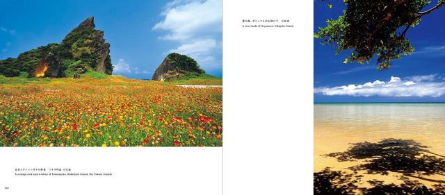 画像: (左)奇岩とテンニンギクの群落 トカラ列島 小宝島/(右)夏の海、ガジュマルの木陰にて 石垣島