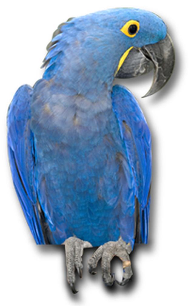 画像: www.frutafruta.com