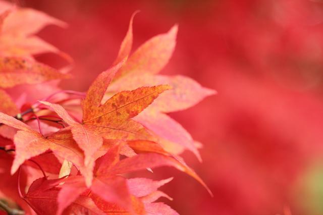 画像: ぷるぷる肌へと導くイロハモミジ葉エキスが配合!