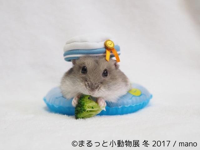 画像2: 「まるっと小動物展」見どころ