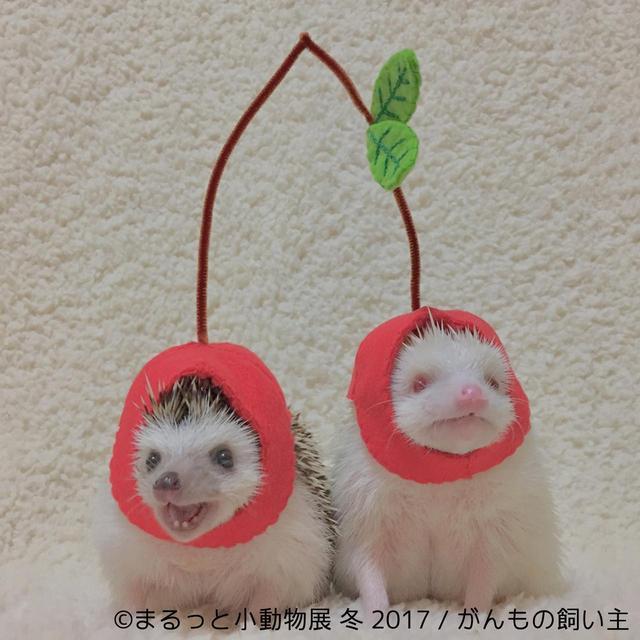 画像3: 「まるっと小動物展」見どころ
