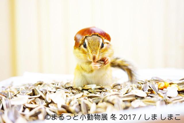 画像8: 「まるっと小動物展」見どころ