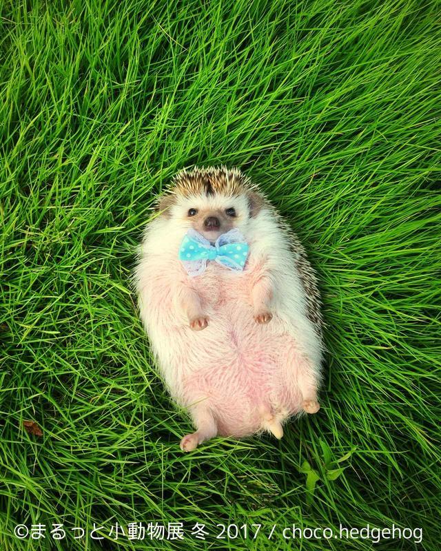 画像1: 「まるっと小動物展」見どころ