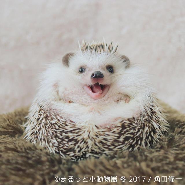 画像10: 「まるっと小動物展」見どころ