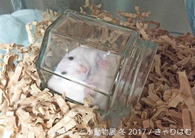 画像9: 「まるっと小動物展」見どころ