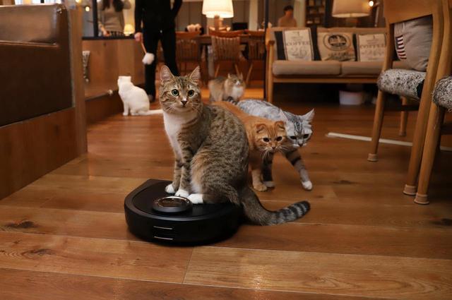 画像1: 『ロボット掃除機 × 猫』夢のコラボが実現!