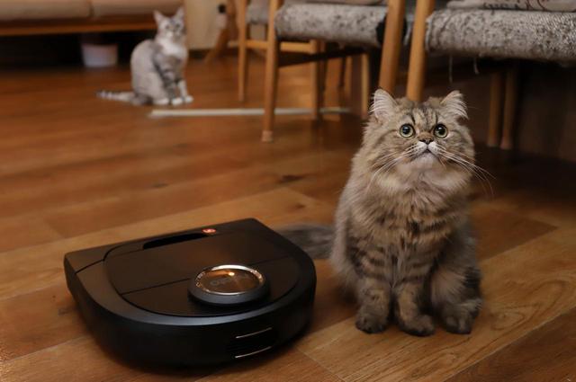 画像2: 『ロボット掃除機 × 猫』夢のコラボが実現!