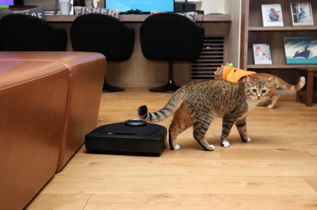 画像3: 『ロボット掃除機 × 猫』夢のコラボが実現!