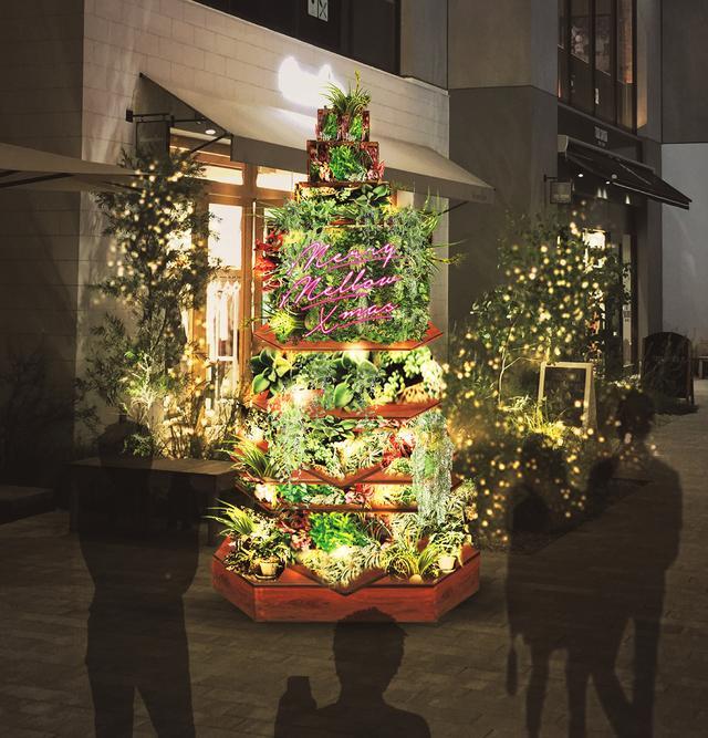 画像2: みなとみらいで「グリーン」を感じるクリスマス