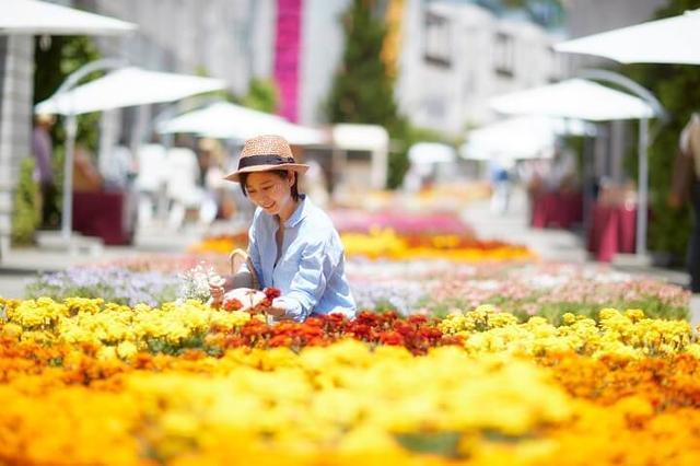 画像: 1 12,000個の花苗で作る「花畳の回廊」