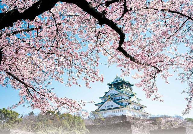 画像: 満開の桜が咲き誇る大阪城へのお花見や、春のおつかいものに最適です