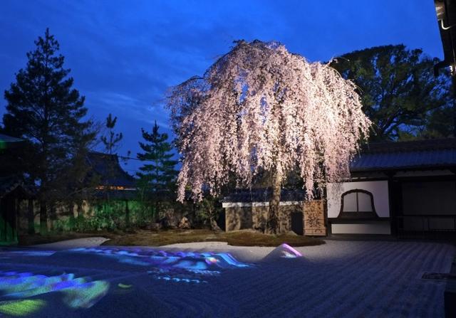 画像1: 春の京都を満喫!高台寺境内「スロージェットコーヒー高台寺」期間限定春メニューを提供スタート!