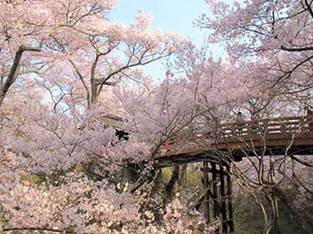 """画像5: 今年行ってみたい注目の""""桜絶景スポット""""ランキング発表!"""