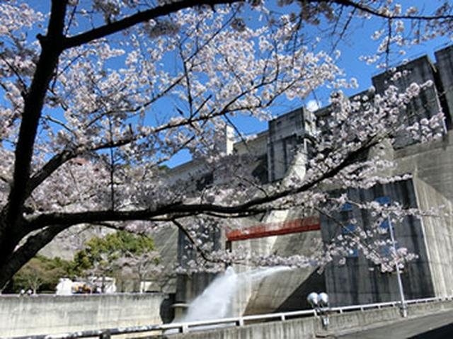 """画像11: 今年行ってみたい注目の""""桜絶景スポット""""ランキング発表!"""