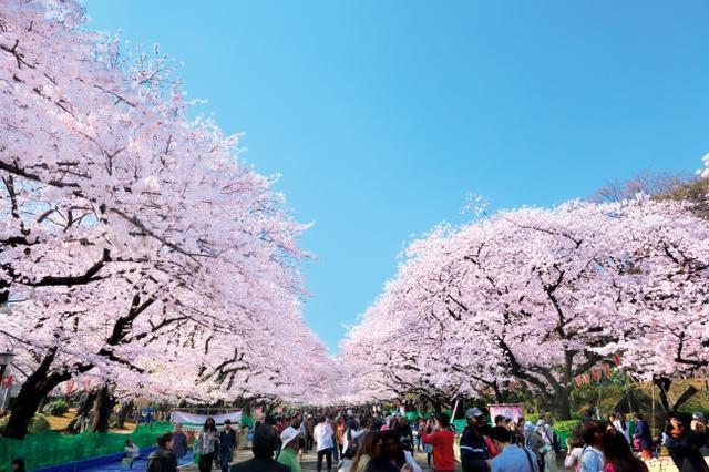 """画像8: 今年行ってみたい注目の""""桜絶景スポット""""ランキング発表!"""