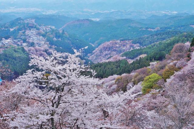 """画像: 『じゃらん』編集部が選んだ 今年行ってみたい注目の""""桜絶景スポット""""ランキング発表! @jalannet"""