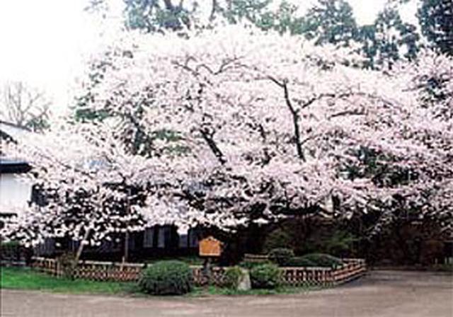 """画像2: 今年行ってみたい注目の""""桜絶景スポット""""ランキング発表!"""