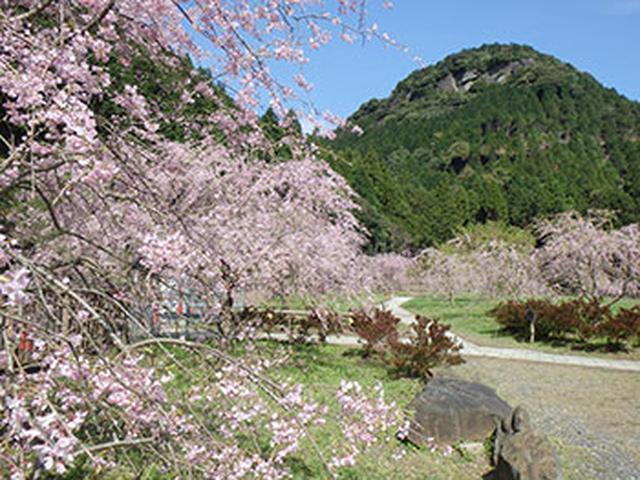 """画像12: 今年行ってみたい注目の""""桜絶景スポット""""ランキング発表!"""