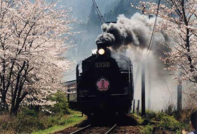 """画像6: 今年行ってみたい注目の""""桜絶景スポット""""ランキング発表!"""