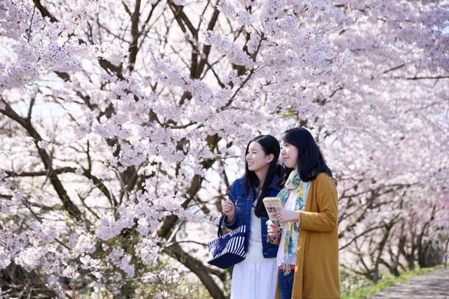 画像: 春を楽しむ「貸切船で川下り花見体験」と「桜もなかづくり」