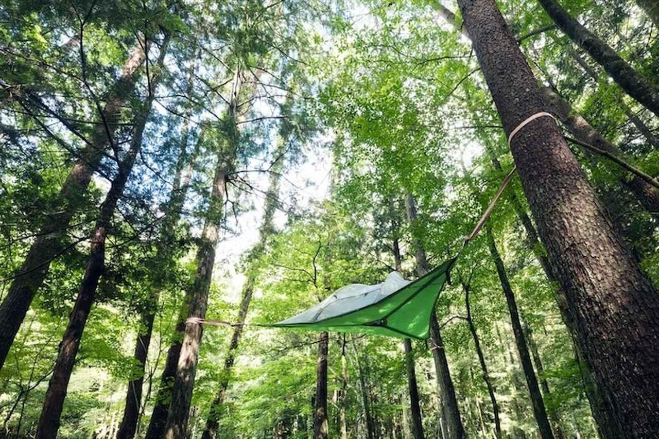 画像: 森の空中シエスタ