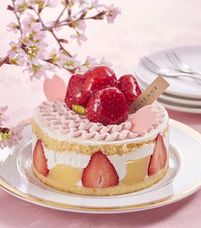 画像: 苺と白桃をサンド。上にはさくらクリームで満開の花びらを描きます。 <アンテノール>さくらアニバーサリー 径11.5cm 2,160円