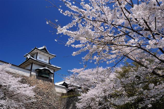 画像: 桜満開の金沢へ1日1便 無料送迎を開始