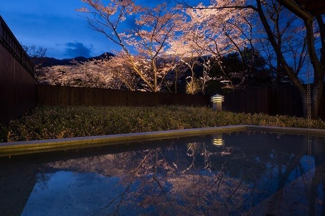 画像1: 満開の桜を愛でる花見露天