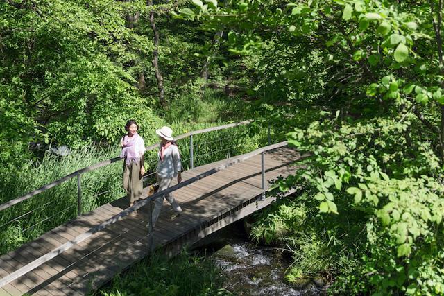 画像: 新緑の息吹を感じられる小道を散策