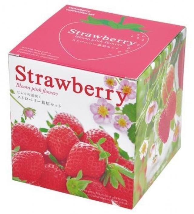 画像: かわいらしいピンクの花と果実の両方が楽しめるイチゴの栽培セット。見て育てて味わえるギフトに。