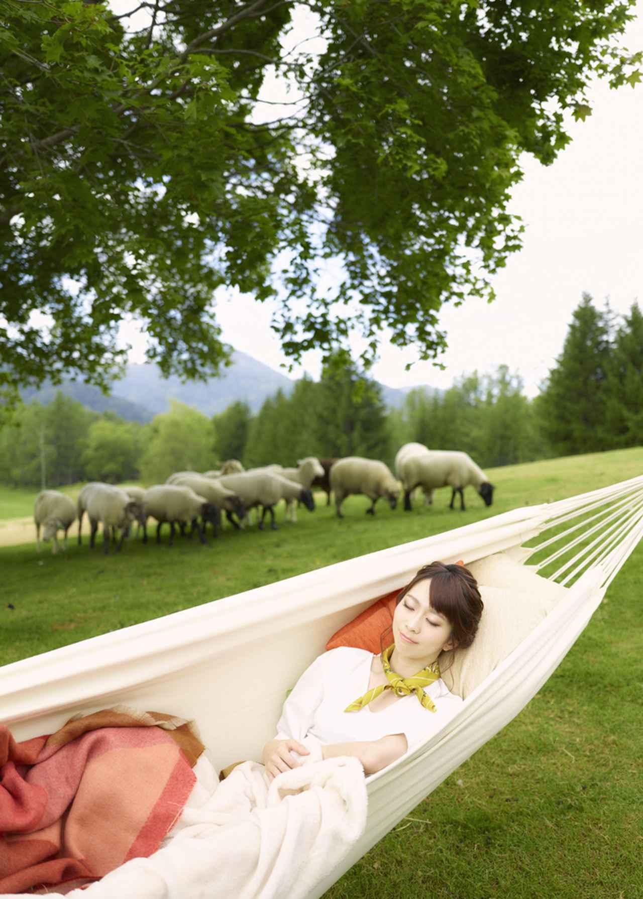 画像: 羊に囲まれて昼寝ができる