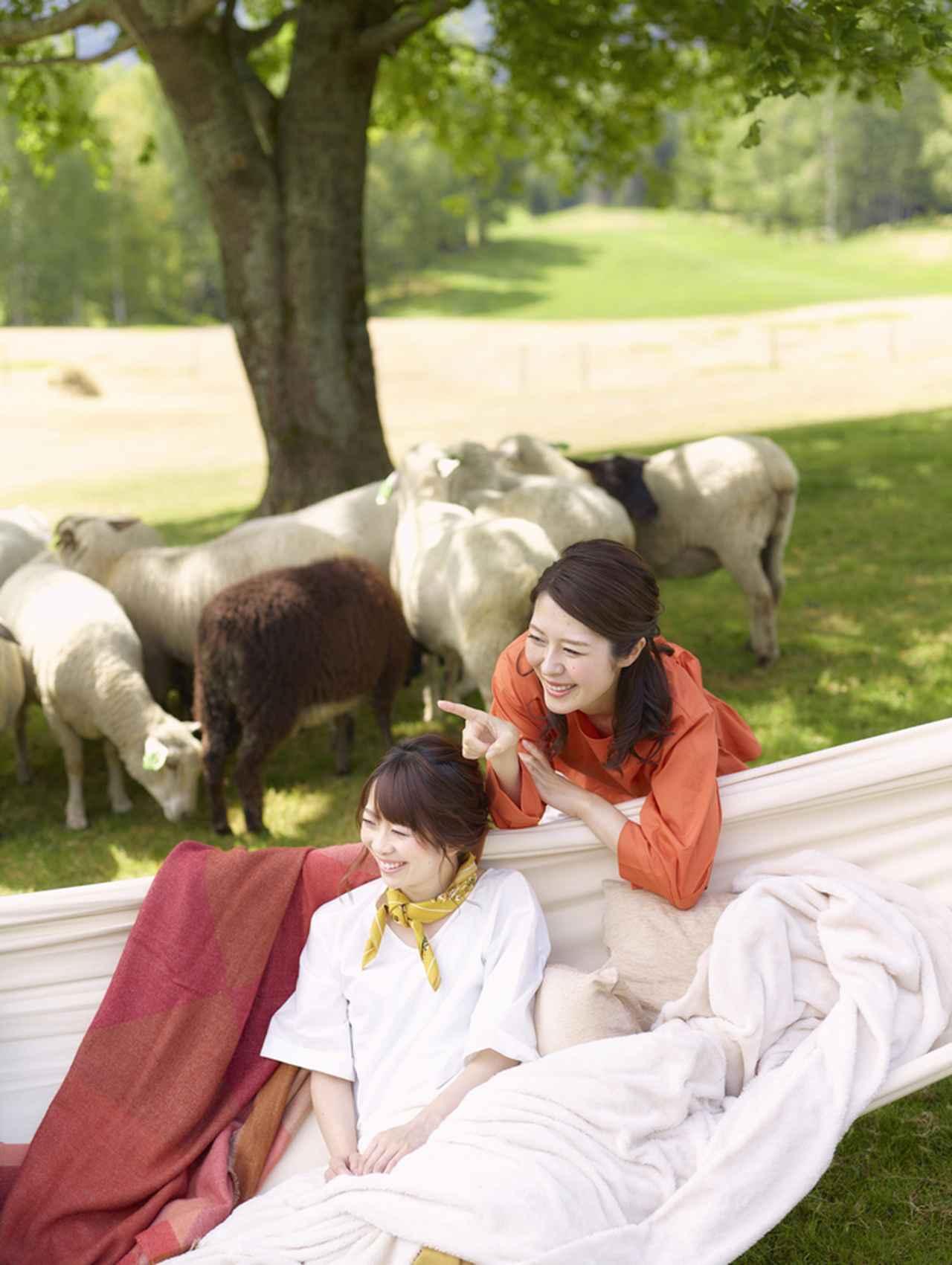 画像1: 羊毛のブランケットにくるまって北海道の景色を眺める