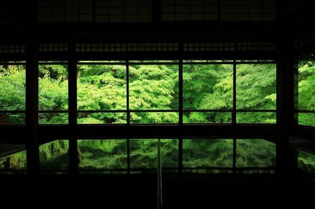画像1: 行列必至の人気寺院「瑠璃光院」初の青もみじ貸切ライトアップ!