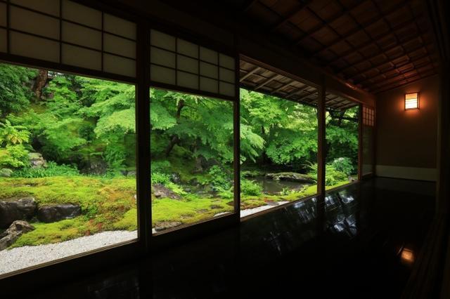 画像4: 行列必至の人気寺院「瑠璃光院」初の青もみじ貸切ライトアップ!