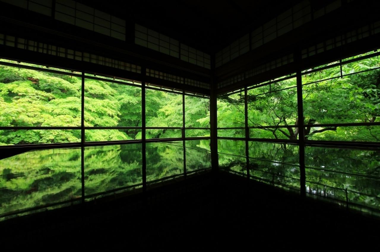 画像2: 行列必至の人気寺院「瑠璃光院」初の青もみじ貸切ライトアップ!