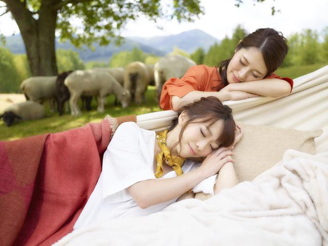画像: 本物の羊を数えながら、うとうとできる新スポット 「羊とお昼寝ハンモック」 羊に囲まれて昼寝を楽しめる新スポットです。大き な木の下には、5本のハンモックが設置されており、 寝転ぶと羊と目線の高さが同じくらいになります。