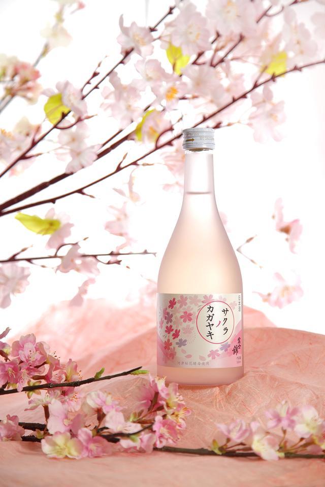 画像1: 桜の酵母を使った甘い日本酒『サクラノカガヤキ』