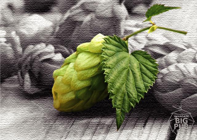 画像: 「クラフトビール」と「贅沢フード」の祭典
