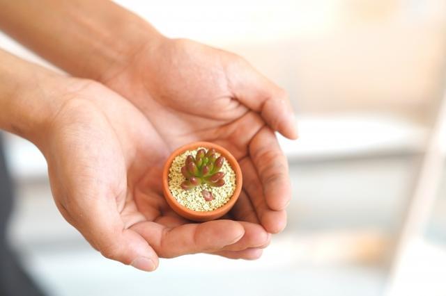 画像3: 夏バテにぴったりなひまわりのスムージーボンボン登場!