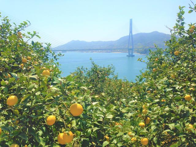 画像1: 【夏季限定スイーツ】レモン生産量日本一「瀬戸田産レモン」を使用『惣之助の詩 瀬戸内レモン餡』