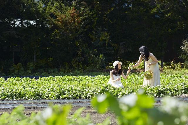 画像: POINT5/野菜畑ショートトリップ