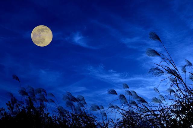 画像: 界阿蘇(大分県・瀬の本温泉) すすきと愉しむ、阿蘇のお月見Bar
