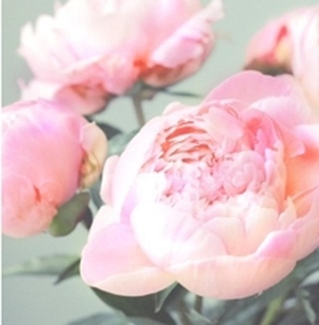 画像: Fresh Peony 幸福感のあるフレッシュピオニー。心も身体も温かく満たされるような香り。 ※しっとりとした使用感