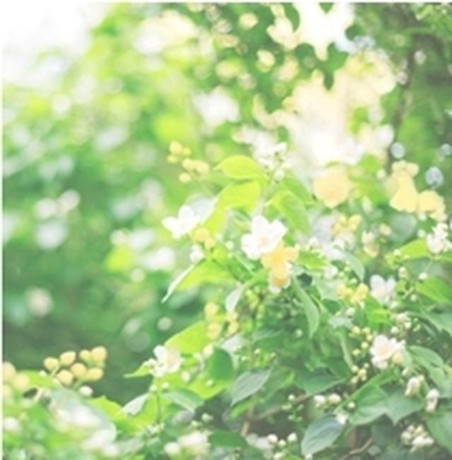 画像: Floral Green リフレッシュ感のあるフローラルグリーン。気持ちから凜とひきしめてくれるような香り。 ※もっともみずみずしい使用感